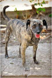 Hündin Millie sucht hundeerfahrene Menschen