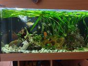 Aquarium mit Technik deko und