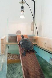 Schildkröten Buddies
