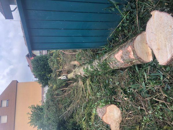 Baumpflege Spezialfällungen mit Seilklettertechnik Gartenpflege