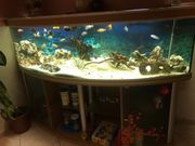Aquarium mit allem Zubehör und