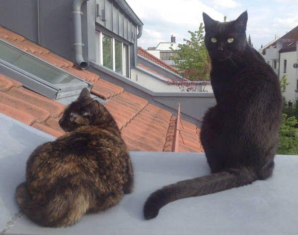 Leider 2 Katzen abzugeben