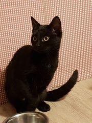 Katzenmädchen Babu sucht tolles Zuhause