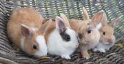 Zutrauliche kleine Kaninchen Babys suchen