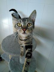 Katze Cora sucht ein Zuhause