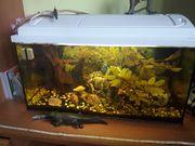 Aquarium 50Ltr Nano Aquarium