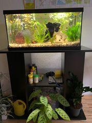 Aquarium Komplettset mit Besatz und