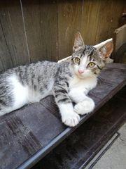 Liebe und verschmuste Kitty 5