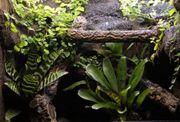 Regenwaldterrarium Exoterra 60x45x60