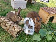 schmusige Kaninchen abzugeben 3 6