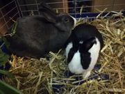 Kaninchen suchen artgerechtes neues zu