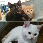 Bengal-Kitten dürfen ab sofort in
