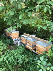 Wiese für Bienen gesucht