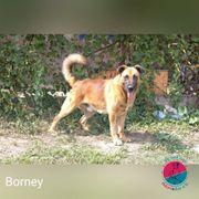 Borney - Menschenfreund sucht liebevolles Zuhause
