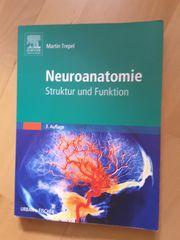 Medizinstudium Neuroanatomie Struktur und Funktion