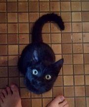 Kitty Gesucht kitten von meiner