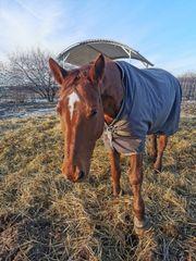 Pferd sucht Pflegebeteiligung