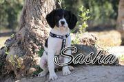Schenken Sie Sasha eine Familie