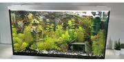 aquarium Juwel 130l