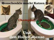 1 Kater Kitten trainiert Nutzung