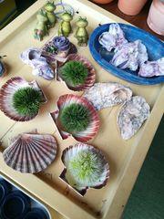 Muscheln Austern Sommerdeko