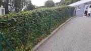 Zaun aus Maschendraht