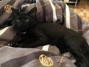 Schwarzes Kätzchen sucht ein Zuhause