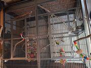 Vogel kafig