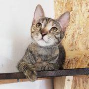 Katzenmädchen Mabel möchte sich in