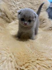 Kitten suchen liebevolles Zuhause ab