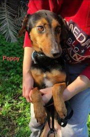 Rossi und Poppy 2 1