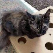 Kätzchen Princess sucht ihr Glück