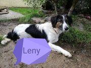 Leny sucht seine Menschen fürs