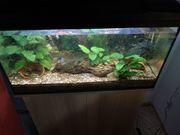 Verkaufe Aquarium Aquarium-Schrank