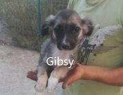 Hundemädchen Gibsy möchte die Welt
