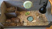 Schildkrötengehege Schildkrötenterrarium Terrarium mit Zubehör
