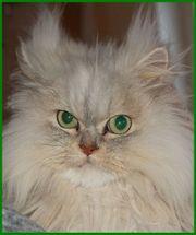Tilly ca 6 5 Jahre -