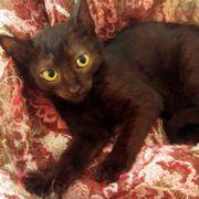 Kätzchen Mavis mag Menschen sehr