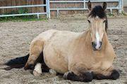 Pflegebeteiligung gesucht Mann sucht Pferd