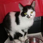 Mila - Kleines süßes Kätzchen sucht