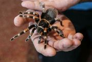 neues Zuhause für Vogelspinnen Skorpione