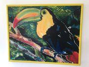 Tolles Bild Tukan im Regenwald