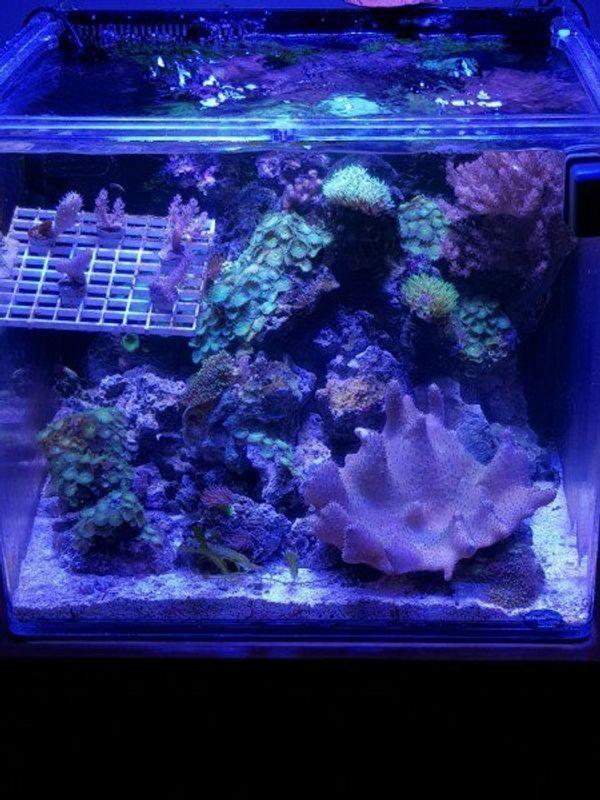 Komplettset Lebendgestein Meerwasser Korallenset