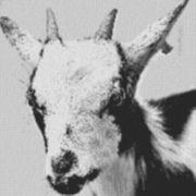 Vorlage für Ministeck Ziege 80x80cm