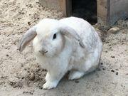 Kaninchen suchen liebevolles Zuhause mit