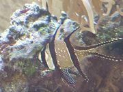 Meerwasseraquarium 300L