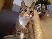 Katzenbetreuung Tierbetreuung mobil erfahren Katzensitter