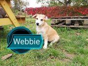 webbie sucht ihr Zuhause auf
