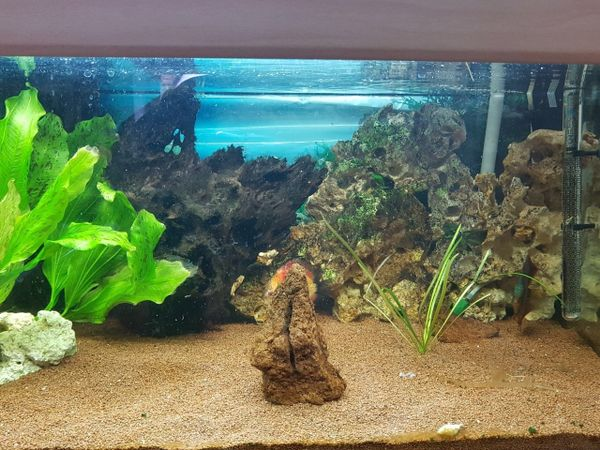 aquarium rueckwand kaufen aquarium rueckwand gebraucht. Black Bedroom Furniture Sets. Home Design Ideas