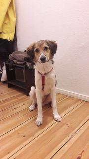 Tierschutzhund -Akino-